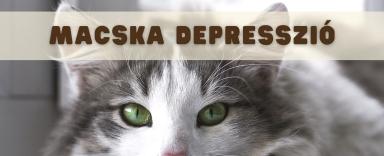 A macska depresszió