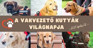A vakvezető kutyák világnapja, 2021. április 28.