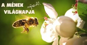 Mi közöm a méhek világnapjához?